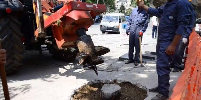Как да премахват изсъхналите корени