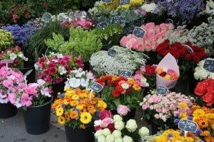 Русия забрани доставки на цветя от Холандия