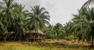 Стъбло на палмите