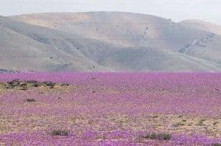 Пустинята Атакама в Чили