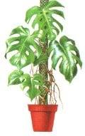 Архитектурни растения
