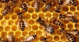 Пчеларство – Плевен 2016