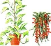 Катерливи и стелещи растения