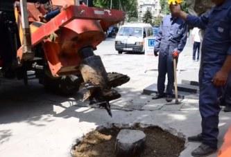 Как да премахват изсъхналите корени на дърво