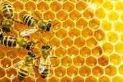 "XIII международно изложение – договаряне ""Пчеларство – Плевен 2015"""