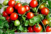 Как да си направим мини зеленчукова градинка у дома