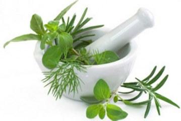 Лечебните свойства на билките