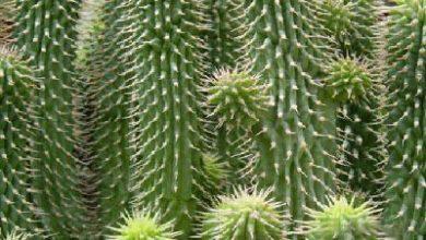 Photo of Кактуси – зелени украшения