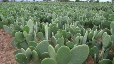 Photo of Мястото на кактусите в растителния свят