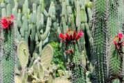 Морфологични особености на кактусите