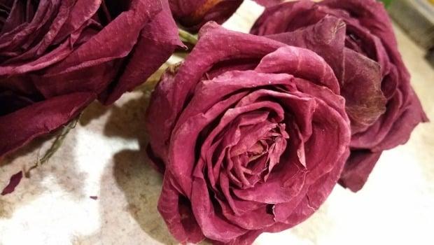 Чести грешки в отглеждането на цветята