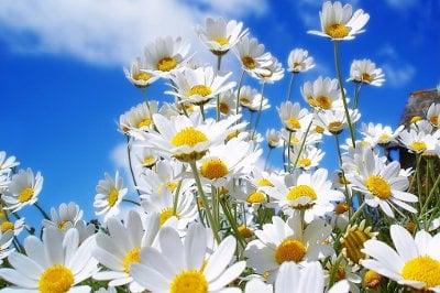 Езикът на цветята