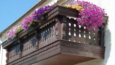 Photo of Гъбични заболявания при градинските и балконските цветя