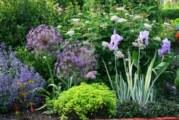 Летни грижи за цветята