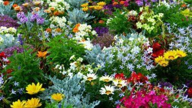 Photo of Как да се грижим за цветята през есента