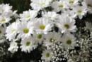 Какво знаем за историята на цветята