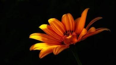 Photo of Можем ли да отглеждаме цветя в тъмни помещения