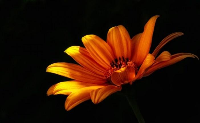 Можем ли да отглеждаме цветя в тъмни помещения