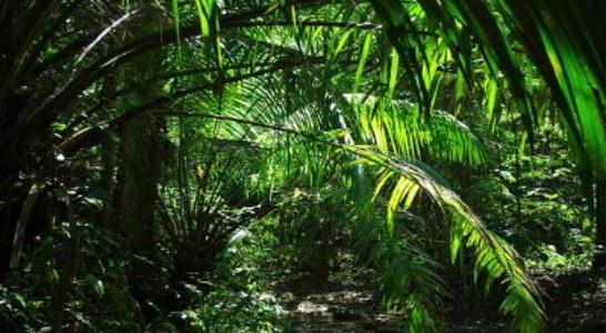 Болести и вредители по палмите