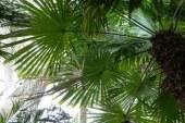 Палмите – Растения на рекордите