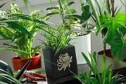 Проблеми с растенията