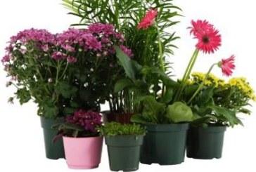 Разполагане на стайните растения