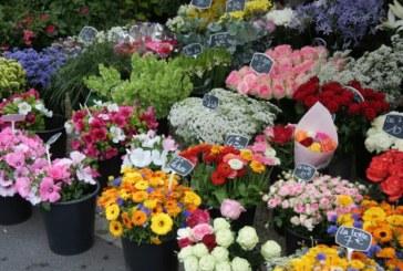 В Русия забраниха доставките на цветя от Холандия