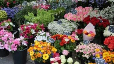 Photo of В Русия забраниха доставките на цветя от Холандия