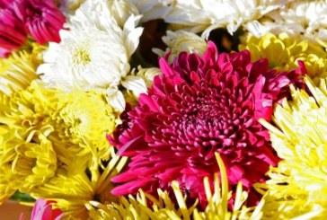 Съхранение на хризантемите