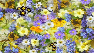 Историята на цветята