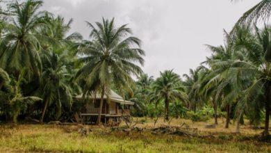Photo of Стъбло на палмите
