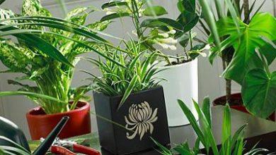 Photo of Класификация на стайните растения