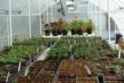 Топлина за цветята и растенията