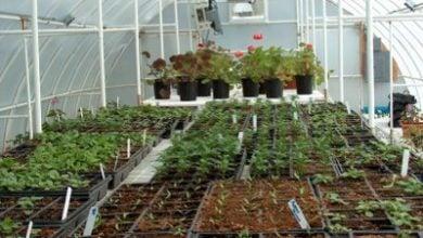 Photo of Топлина за цветята и растенията