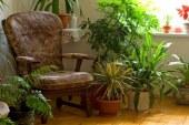 Разполагане на растенията в трапезарията