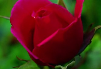 Цъфнали цветя, невероятна природа! (Видео)