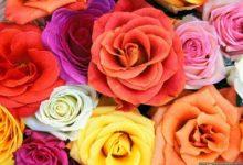Photo of Цветя и годишнини