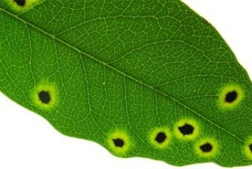 Вредители по растенията
