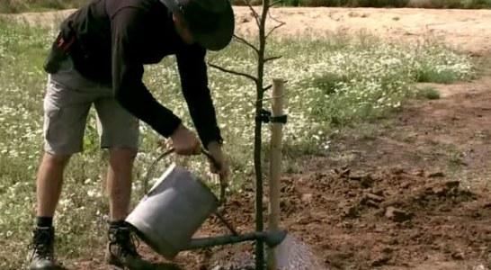 Засаждане на овощни дървета