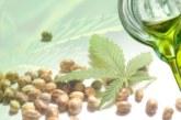 За какво е полезно конопеното олио, извлечено от конопено семе?