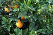 Декоративно-плодни видове растения