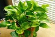Единично растение
