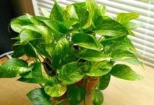 Photo of Единично растение