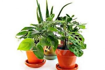 Форма на стайните растения