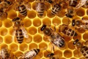 "XIV международно изложение–договаряне ""Пчеларство – Плевен 2016"""