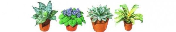 Розетъчни растения