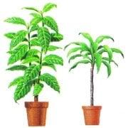 Дървета и палми