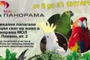 Най-голямата изложба на папагали в България вече и в Плевен!