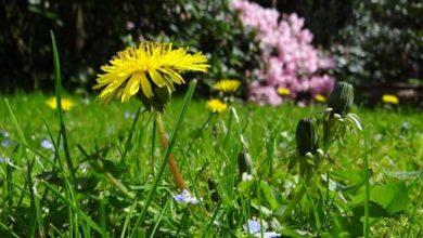 Photo of Няколко идеи как да озелените вашата градина