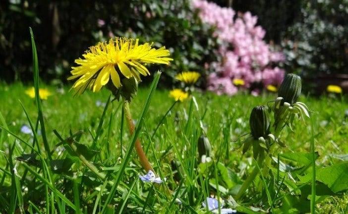 Няколко идеи как да озелените вашата градина